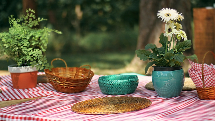 picnic 17